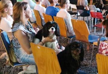 Dog Friendly кинопоказы продолжаются