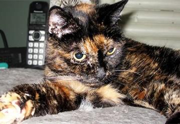 Книга рекордов Гиннесса назвала старейшую в мире кошку. Фото: guinnessworldrecords.com