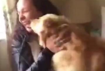 Видео с воссоединившейся с хозяйкой собакой посмотрели 14 миллионов человек