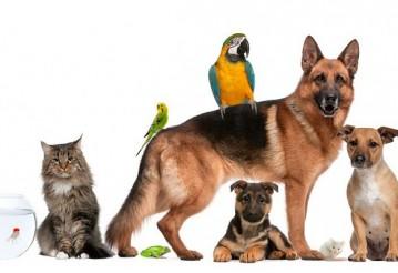 """Все для домашних животных: купить в интернет-магазине """"Zoomama"""""""